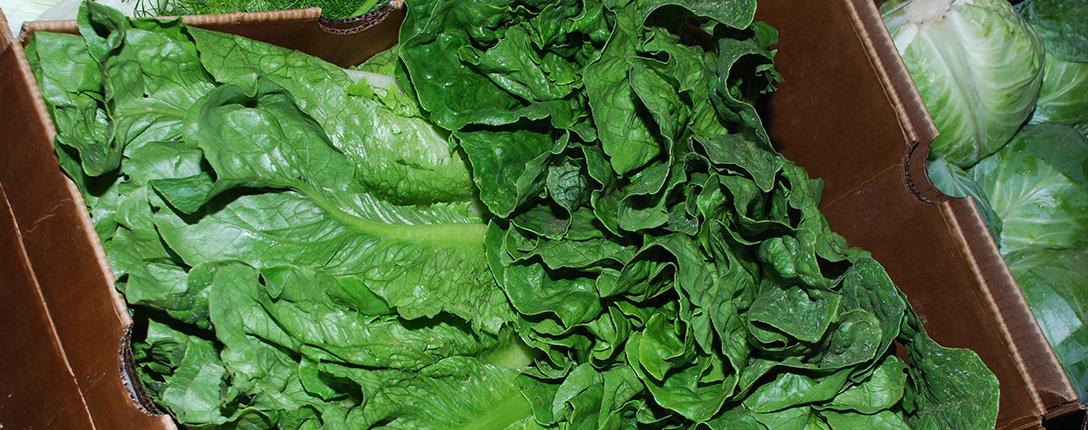butter-lettuce